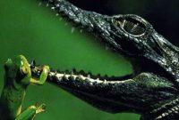 Spesies-Amfibi-dan-Reptil,-Menjelaskan-Pengertian-dan-Perbedaan