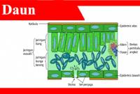 Daun-adalah-fungsi-jenis-struktur-bagian-klasifikasi